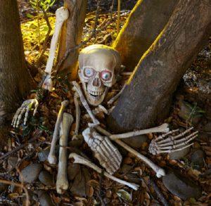 skull_bones_ebay